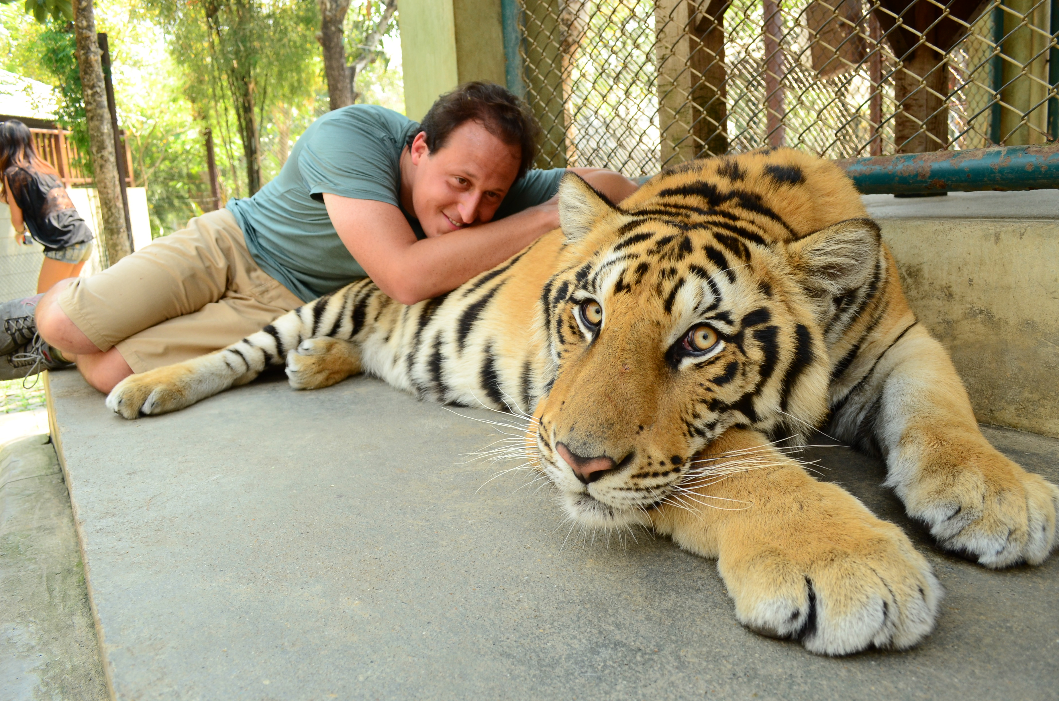 Top 10 Facts About Tiger ★ The Biggest Cat in the world ...  |Biggest White Tiger In The World