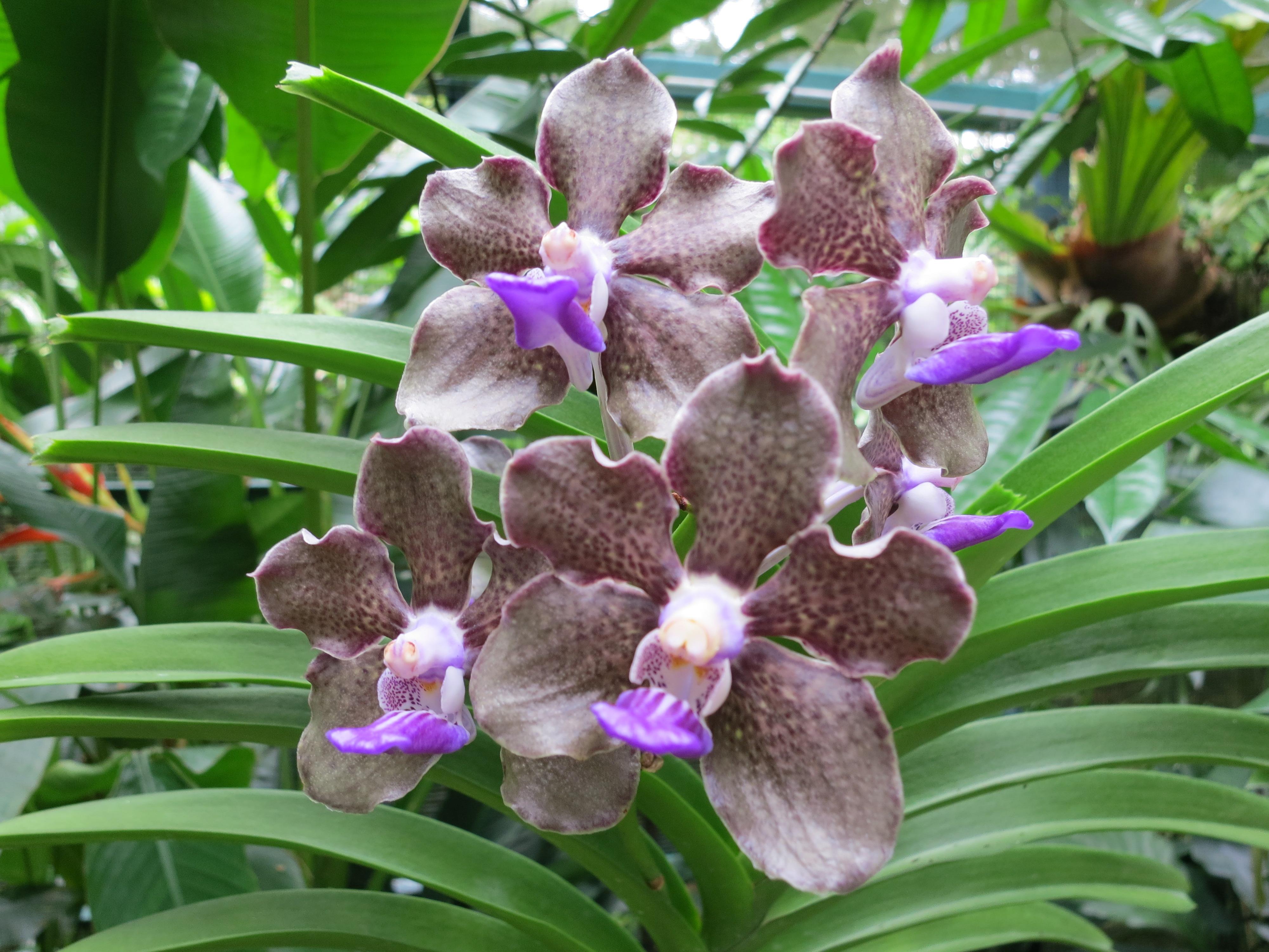 National Orchid Garden 9 U2013 Flowers