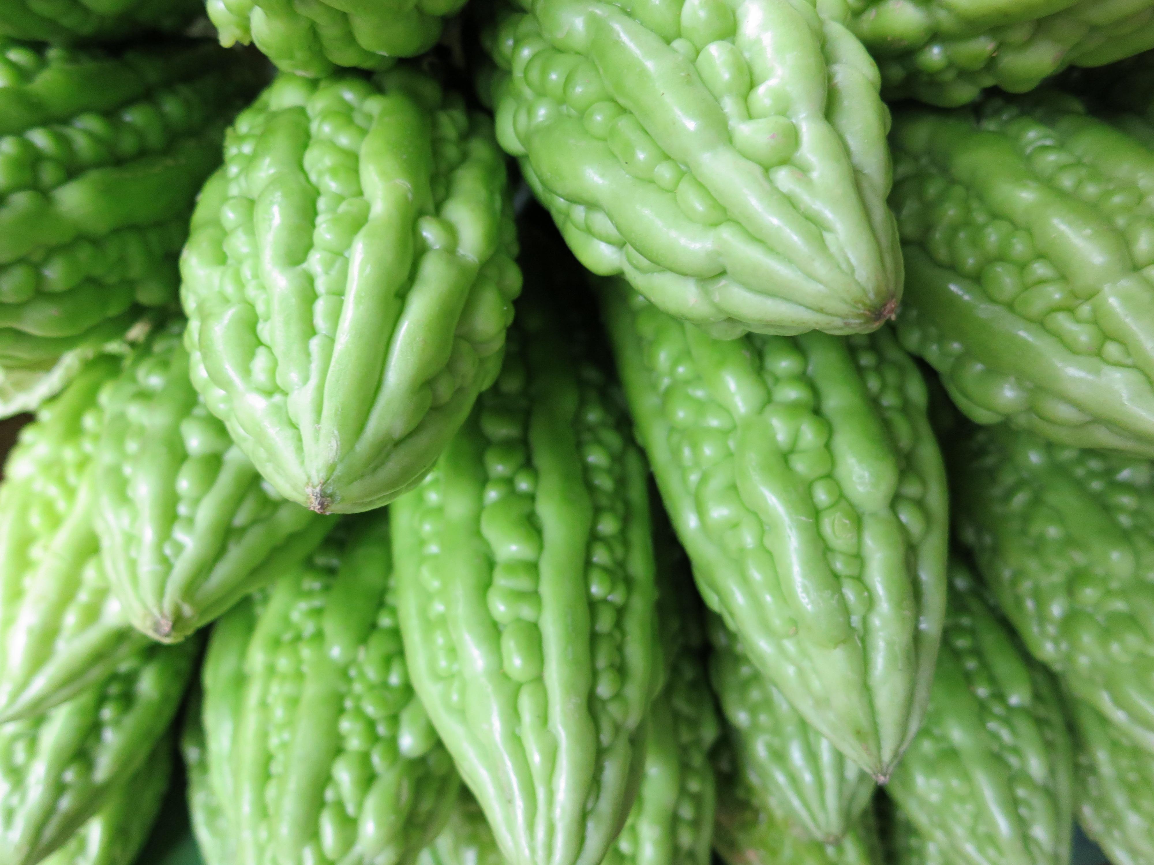 Kadal market 8 bitter melon temporarily lost - Bitter melon culture ...