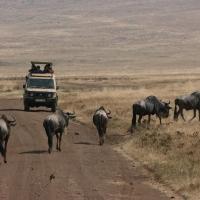 On Safari with the Predators and Prey: Tanzania - Part Two