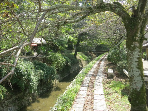 A view along the Tetsugaku-no-michi, also known as the Path of Philosophy: a pleasant 30-minute walk alongside a canal, the perfect place to collect your thoughts
