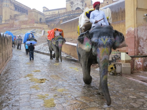 Elephants carrying tourists and travelers along the zig-zagging pathways up to the fort