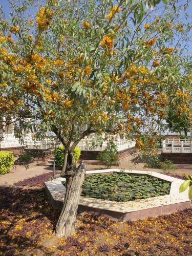 Jaswant Thada 15 - Cool Tree