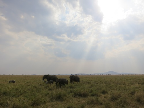 Serengeti 13 - Elephants