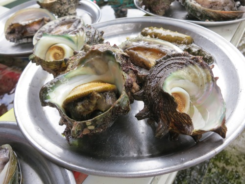 A variety of sea critters brought up by hand on Jeju-do in South Korea
