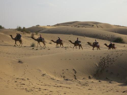Camel Safari 103 - Camel Troup