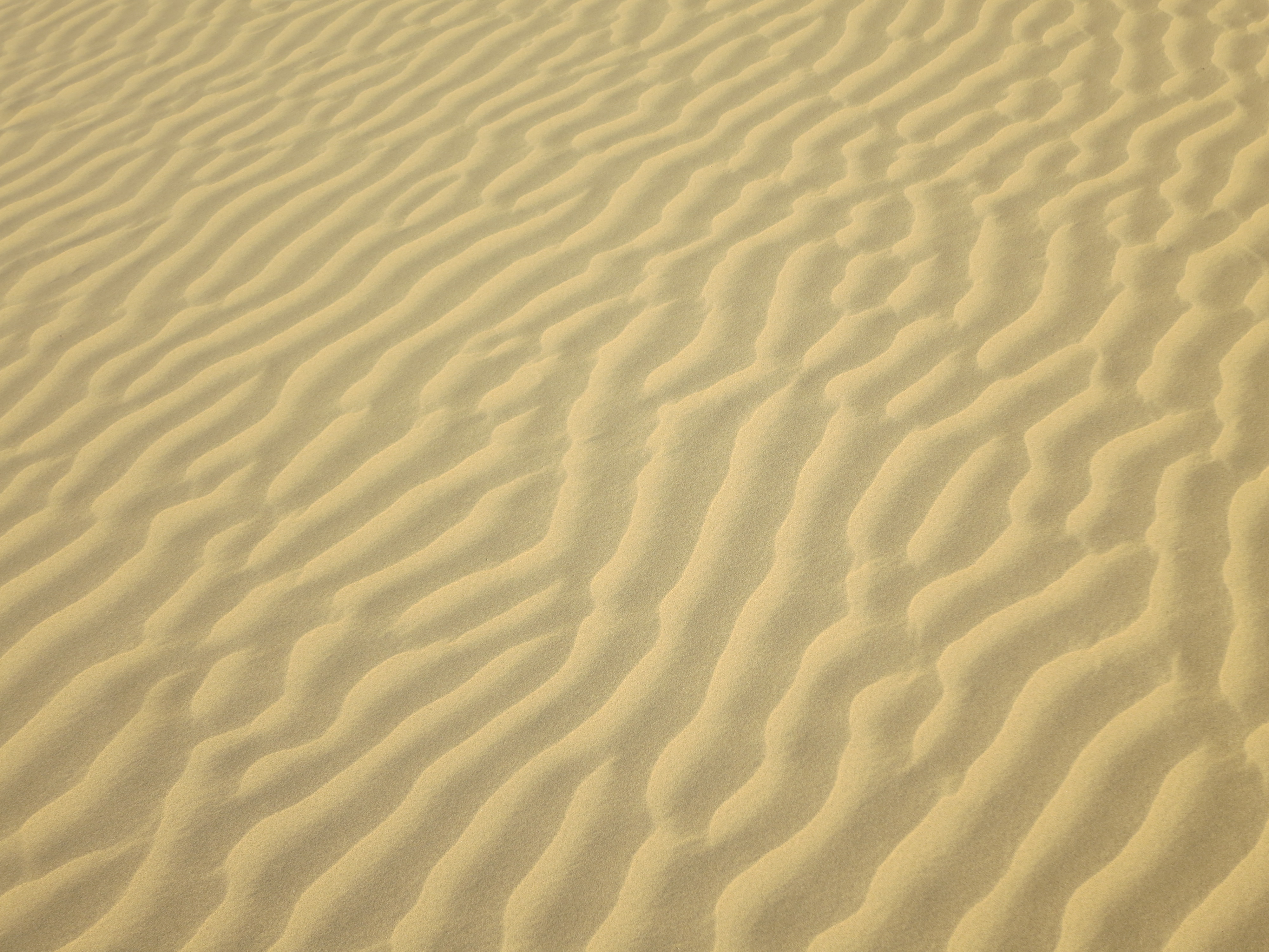 Camel Safaris and Sand Dunes in Jaisalmer | Temporarily Lost