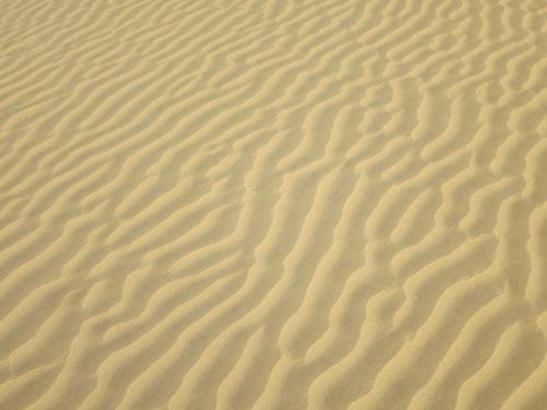 Camel Safari 111 - Designs in Sand Dunes