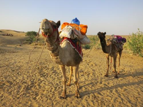 Camel Safari 180