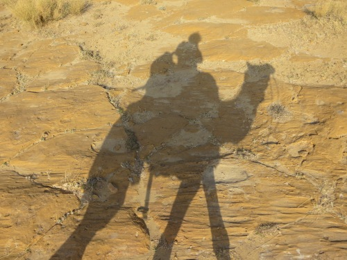 Camel Safari 186 - My Shadow