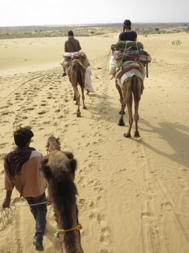 Camel Safari 21