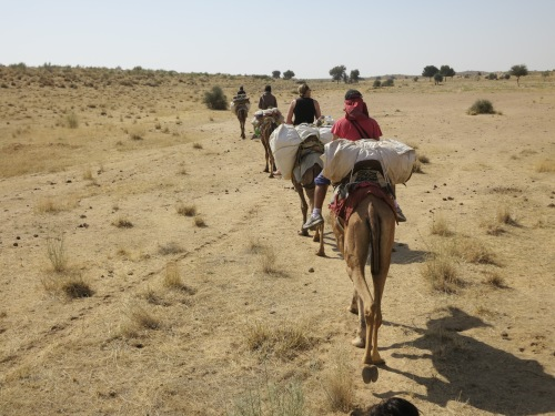 Camel Safari 46