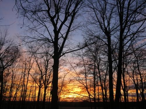 The sun setting through the trees near my family's house