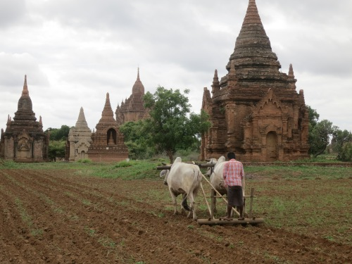 The presence of the many temples and pagodas doesn't deter the locals from continuing to farm their fields, but it does offer then a nicer view