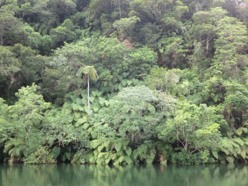 A look at the indigenous vegetation that consumes every bit of land right up to the river