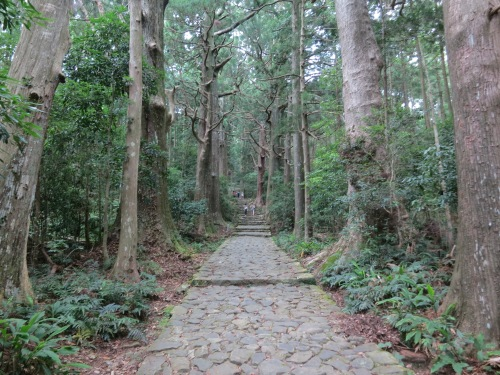 The final climb up to the town of Nachi-san includes an formidable trek up this giant staircase (known as Daimonzaka) amid some ominous-looking trees