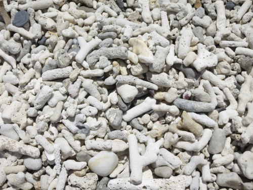 The remains of the coral reefs in the area after having washed up on the beach
