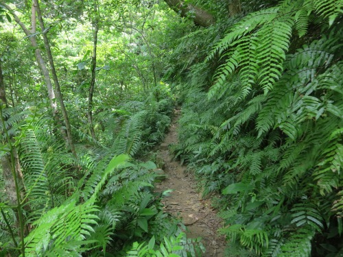 The foliage along the trail looks quite a bit different than my last hike a few weeks back along the Kumano Kodo