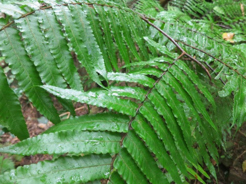 Hiking 5 - Fern