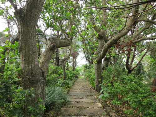 The path down to the beach