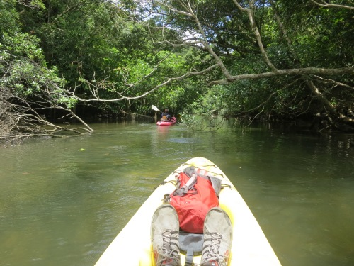The kayaks allowed us to explore some of the smaller rivers and streams that the normal ferry boats can't reach