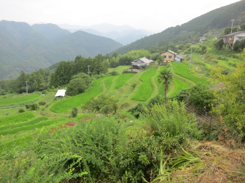 A few layers of cascading rice fields in the village of Takahar