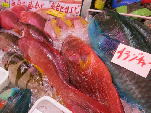 A colorful variety of tropical fish for sale