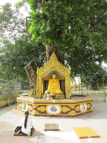 Shwe Dagon Paya 25 - Praying by Bodhi Tree