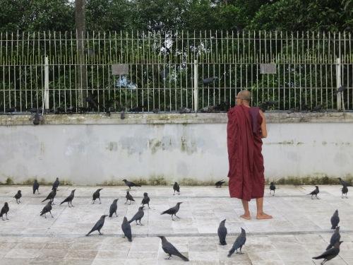 A monk feeding the birds