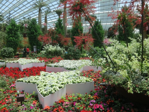The flower dome, a completely enclosed and climate controlled bubble that houses species of flower from almost every region of the world