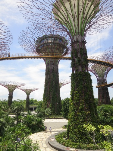 The grove of Super Trees, towering upwards of 50 meters in the air and especially coming alive at night, when they are thoroughly illuminated